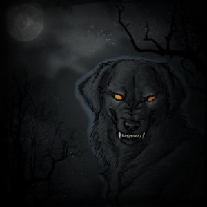 Black Dog3